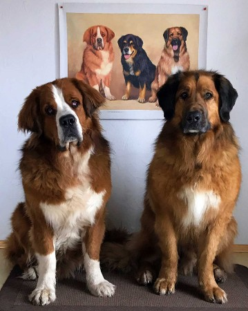 Hundeportrait vom Foto