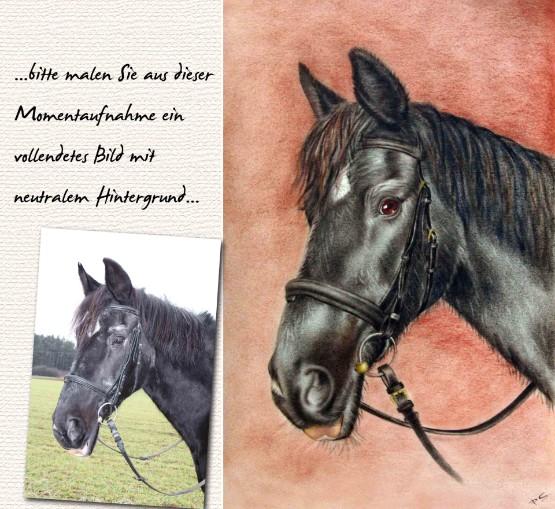 Pferd Portrait Öl Farbe