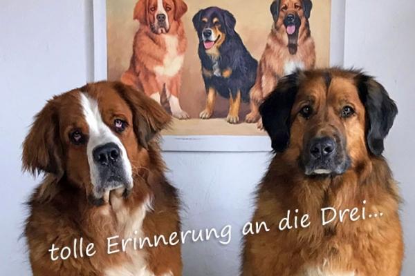 Kundenmeinung Portrait nach Foto Hunde