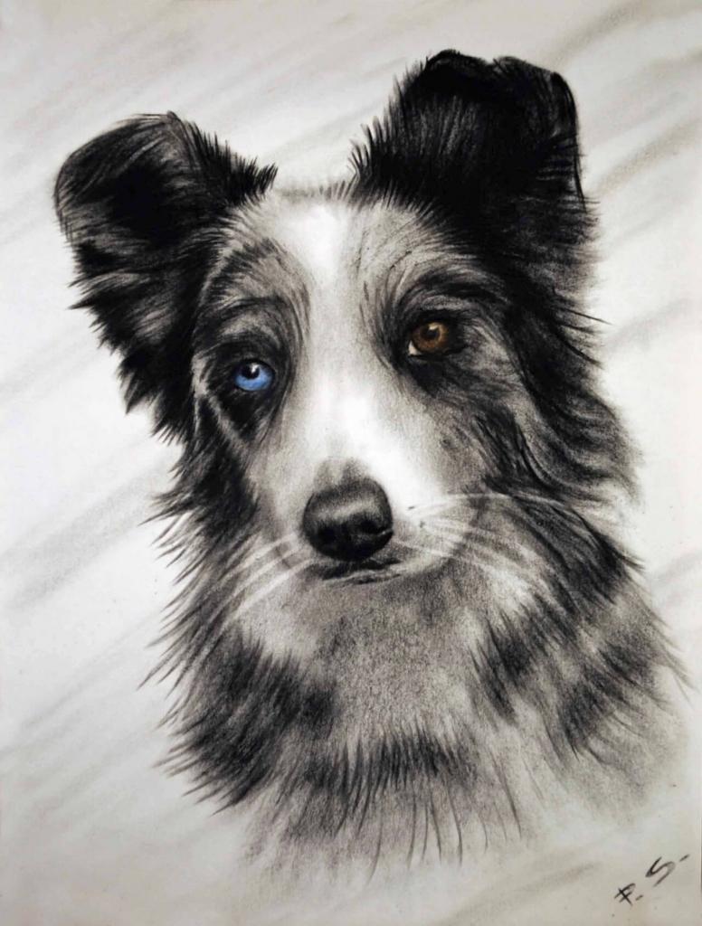 Hundeportrait schwarz weiß