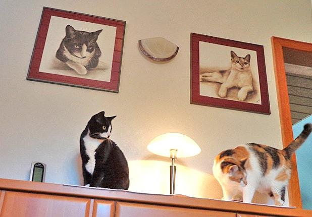 Katzen von Foto gezeichnet