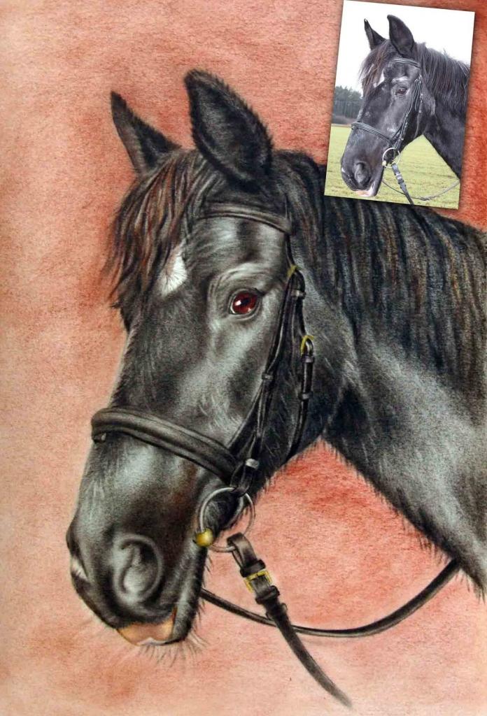 Pferdeportrait in Farbe von Foto