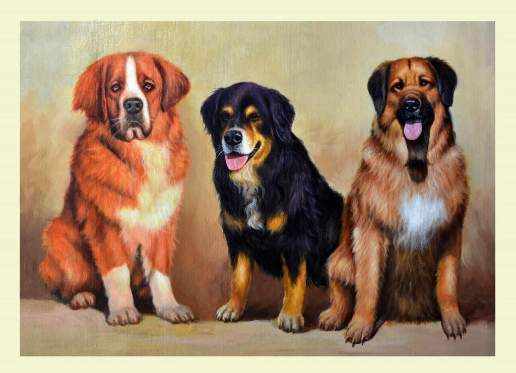 tierportrait 3 hunde
